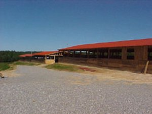 Big South Fork Stables